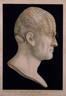 Temperament Photograph - Phrenological Chart Of The Head Showing by Everett