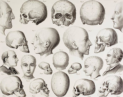 Phrenological Illustration Art Print by English School