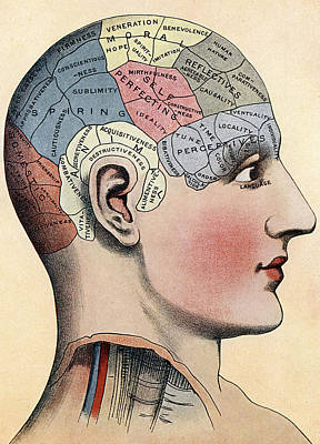 Phrenology Chart Art Print by American School