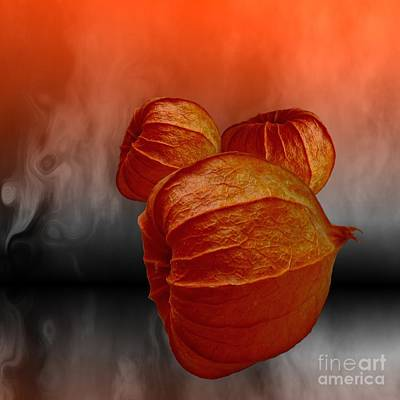 Digital Art - Physalis Fire by Issabild -