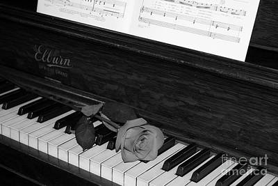 Photograph - Piano Rose by Crystal Nederman