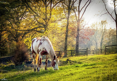 Photograph - Picante' On Springtime Pasture by Phil Rispin