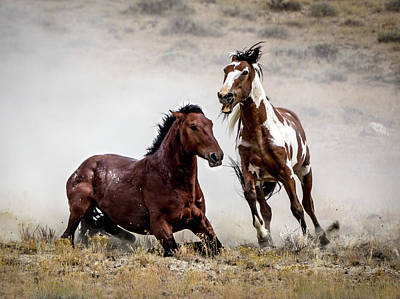 Photograph - Picasso - Wild Stallion Battle by Nadja Rider