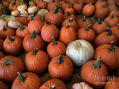 Photograph - Pick A Pumpkin by Mark Miller