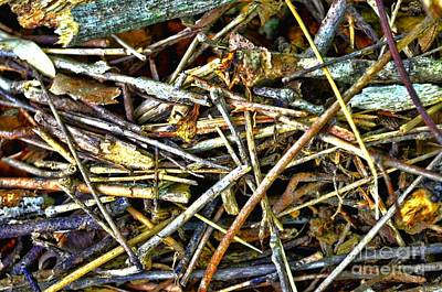 Photograph - Pick Up Sticks  by Debbie Portwood