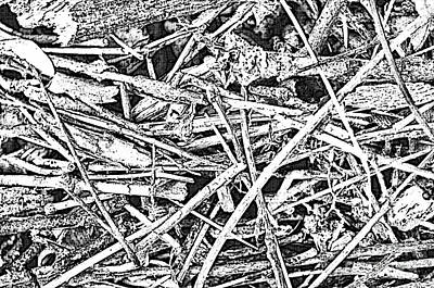 Photograph - Pick Up Sticks - Digit Effect II by Debbie Portwood