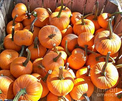 Photograph - Pick Your Pumpkin by Jean Fry
