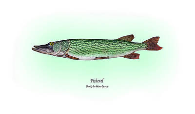 Pickerel Painting - Pickerel by Ralph Martens