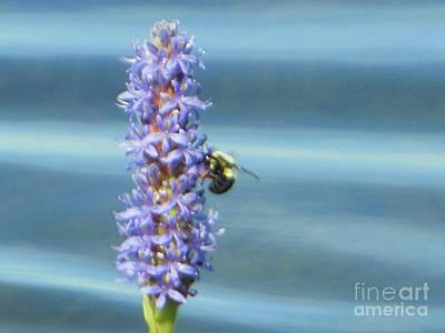 Pickerelweed Bumble Bee Art Print