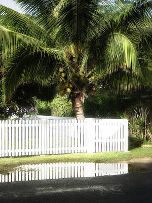 Photograph - Picket And Palm by Russell Pierce
