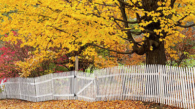Photograph - Picket Fence And Fall Foliage by Alan L Graham