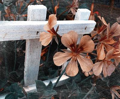 Photograph - Picket Fence Blooms by Kathleen Messmer