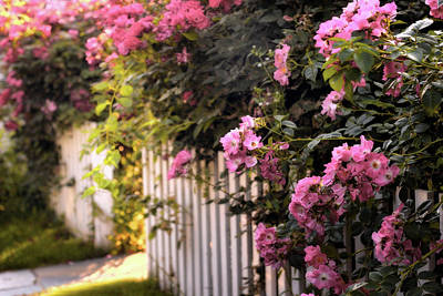 Picket Fence Photograph - Picket Fence Floral by Jessica Jenney