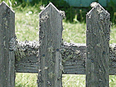 Rhoades Photograph - Picket Fence by Mg Blackstock