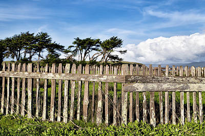 Photograph - Picket Fence On A Coastal Prairie by Kathleen Bishop