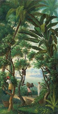 Antilles Painting - Picking Coffee In The Antilles by Anonymous