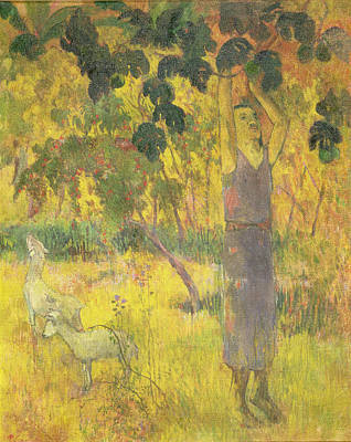 Picking Fruit From A Tree Art Print by Paul Gauguin