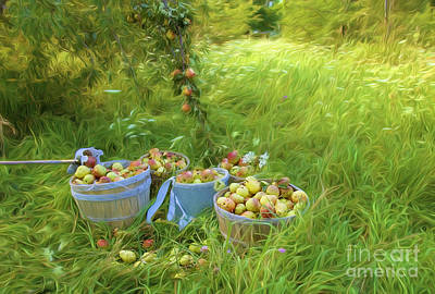 Pears Photograph - Picking Pears #3 by George Robinson
