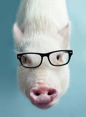 Pig Wall Art - Photograph - Pickle The Pig I by Eli Warren