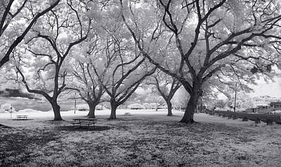 Infra-red Photograph - Picnic Bench Dream by Sean Davey