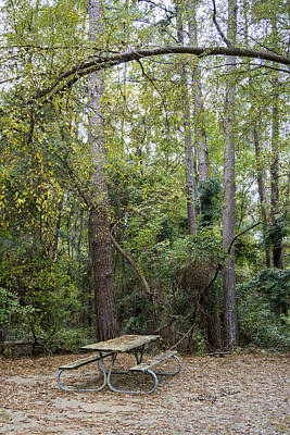 Photograph - Picnic In The Woods by Ricky Dean