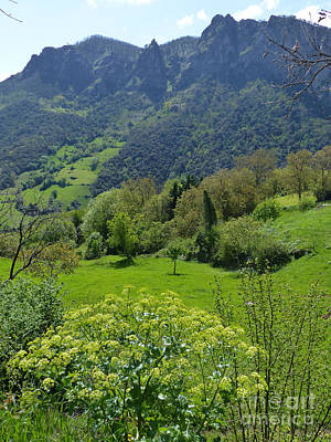 Photograph - Picos De Europa - Springtime by Phil Banks