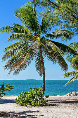 Photograph - Picture Postcard Perfect Palm In Key West by Bob Slitzan