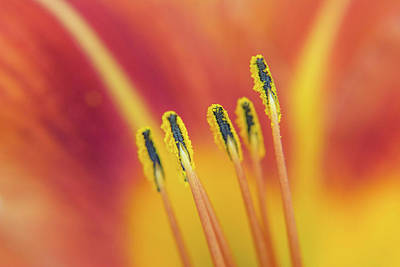 Photograph - Pictures Of Matchstick Men by Claudia Heidelberger
