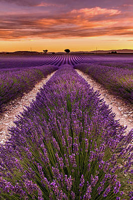 Photograph - Piece Of Mind by Jorge Maia