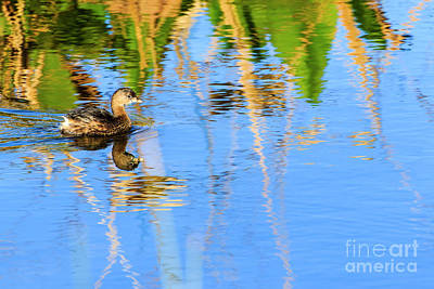 Photograph - Pied Billed Grebe 2 by Ben Graham