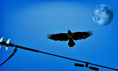 Photograph - Pied Crow And Full Moon... by Werner Lehmann