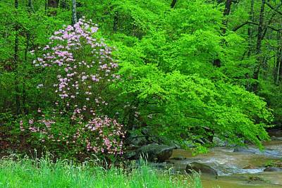 Photograph - Piedmont Azalea By The Creek by Kathryn Meyer