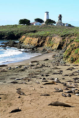 Photograph - Piedras Blancas Elephant Seals by Floyd Snyder