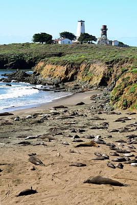 Photograph - Piedras Blancas Elephant Seals by Floyd Snyder