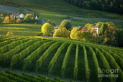 Piemont Vineyard Iv Art Print by Brian Jannsen