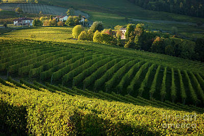 Grapevine Photograph - Piemonte Vineyard II by Brian Jannsen