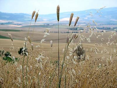Photograph - Pienza Hills by Diane Height