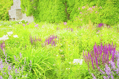 Photograph - Piet Oudolf Garden At Tbg by Marilyn Cornwell