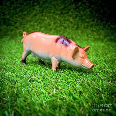 Green Color Photograph - Pig Figurine by Bernard Jaubert