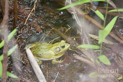 Photograph - Pig Frog by David Grant