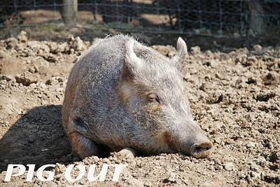Photograph - Pig In Mud With Pig Out Slogan by David Fowler