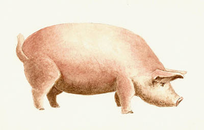 Pig Art Print by Michael Vigliotti