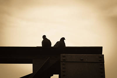 Solitude Photograph - Pigeon And Steel by Bob Orsillo