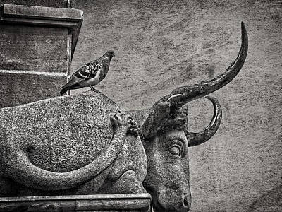 Photograph - Pigeon And Sleeping Stone Bull by Phil Cardamone