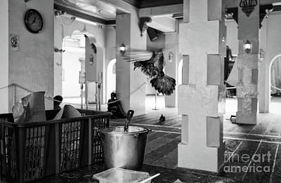 Photograph - Pigeon At The Temple by Dean Harte