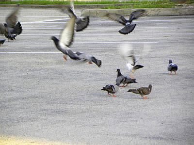 Photograph - Pigeon Flight by Chris Mercer