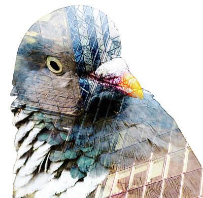 Photograph - Pigeon Head Shot Double Exposure Fine Art by Jacek Wojnarowski