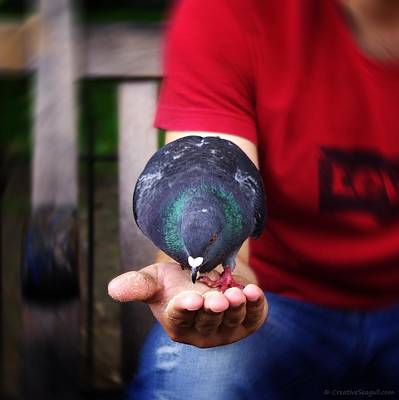 Photograph - Pigeon in a hand by Neringa Barmute