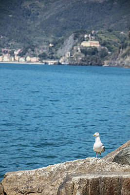 Photograph - Pigeon In Cinque Terre Italy by John McGraw