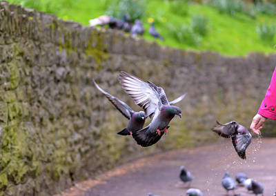 Photograph - Pigeon In The Park B by Jacek Wojnarowski